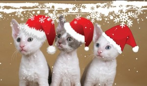 kitten-christmas-wallpapers